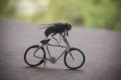 mosca in bicicletta