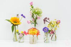 bloemen Zilverblauw