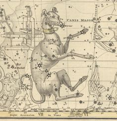 canis major constellation - Google Search