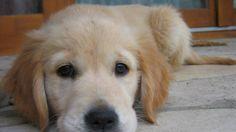 Durante os dias 21, 22 e 23 de dezembro, a companhia aérea levou 230 cachorros terapeutas certificados para brincar com os viajantes em alguns aeroportos dos EUA