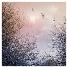 Nature photography, Ducks, Flying, Winter trees, Birds, Snow, Wall... (27 CAD) ❤ liked on Polyvore featuring home, home decor and wall art