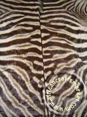 Zebra hide 7 clos ep
