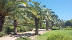 Benalmadena, Spain. Parque la Paloma Benalmadena Spain, Sidewalk, Travel, Parks, Viajes, Side Walkway, Walkway, Destinations, Traveling