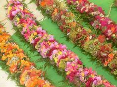Beautiful flower Lei from Hawaii