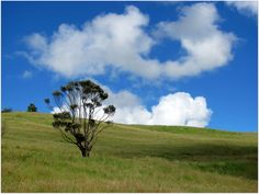Near Warkworth, New Zealand