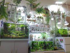 botanical/aqua wall