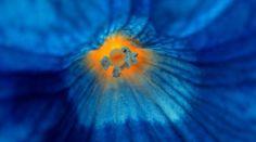 Agosto blu come mare profondo | Fito