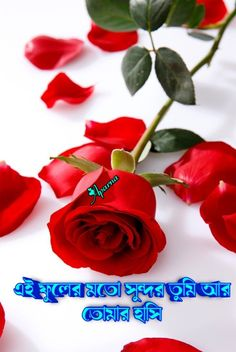 Romantic Shayari, Rose, Flowers, Plants, Pink, Plant, Roses, Royal Icing Flowers, Flower