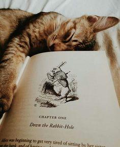 De tout et de rien... — bookish-soul: Paradise.