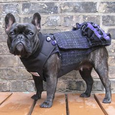The City Coat - Waterproof Insulated Girls French Bulldog Pug Winter J – Babies & Beasts