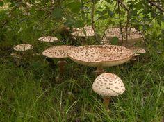 Fotogalerie: Vypukla houbařská sezona. Co a kde lze najít za úlovky?