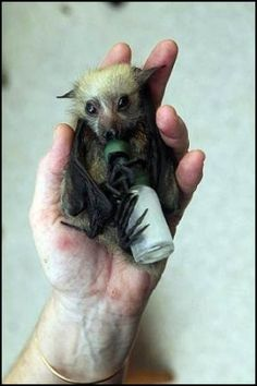 Abandoned baby bats. Yes I will adopt you no questions  asked.