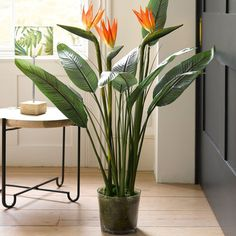 Bird of Paradise Plant Bird Of Paradise Yoga, Bird Of Paradise Wedding, Birds Of Paradise Plant, Orange Flower Names, Orange Flowers, Hawaiian Flowers, House Plants Decor, Plant Decor, Types Of Oranges