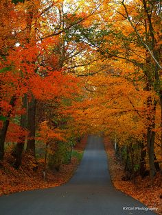 Autumn Road in Kentucky