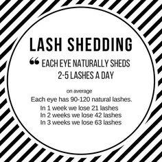 """#lashshedding #eyelashextensions #lashfacts"""""""