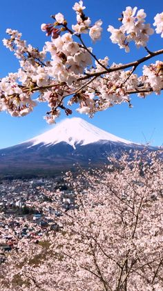Beautiful Places In Japan, Beautiful Photos Of Nature, Beautiful Sites, Beautiful Landscapes, Cherry Blossom Japan, Cherry Blossom Season, Asia Travel, Japan Travel, Japan Countryside