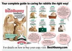 Shop for handmade, vintage, custom, and unique gifts for everyone Bunny Care, Pet Rabbit, Binky, Rabbits, Bunnies, Cute Pictures, Unique Gifts, Posters, Etsy Shop