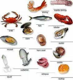 Seafood vocabulary.