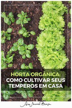 Horta orgânica: saiba quais são os melhores temperos para ter em casa e como mantê-los bem.