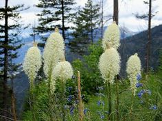 Wild Edible Plants of the Pacific Northwest - great site, lots of photos!