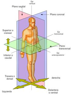 Temas de estudio para la anatomía humana general