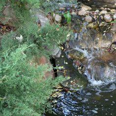 Japanese Gardens X Water. .. .. #artblog #fblog #lifestyle #photography #nature #naturephotography #japanesegarden #himejigardens #adelaide #southaustralia #fblogger #fbloggers #sewingblog #sewingblogger #lifestyleblog #lifestyblogger #lifestylebloggers #australia #adelaide #melbourne #sydney #perth #brisbane #goldcoast #canon #canon750d #photographer #naturelovers #photo #photoftheday