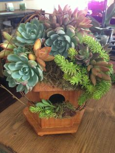 Succulent birdhouse from the Succulent Perch