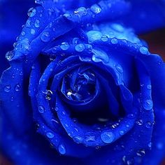 Blue roses are not mainstream, but they are elegant and beautiful!