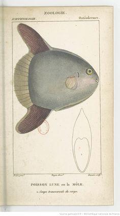 Poissons, Dictionnaire des sciences naturelles.... Partie 2 / Par plusieurs professeurs du Jardin du roi | 1816-1830