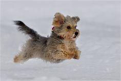 Hund - Bild & Foto von Belfo aus Hunde - Fotografie (2502363) | fotocommunity