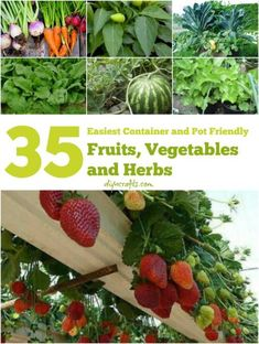 The 35 easiest container & pot friendly fruits, vegetables & herbs.