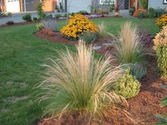 deer resistant landscaping - Google Search