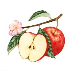 Laden Sie den Premium-Vektor Illustration of red apple 401642 herunter - Dekoracje - mini caramel apples Apple Illustration, Botanical Illustration, Graphic Illustration, Apple Art, Red Apple, Drawing Apple, Apple Picture, Apple Vector, Apple Icon