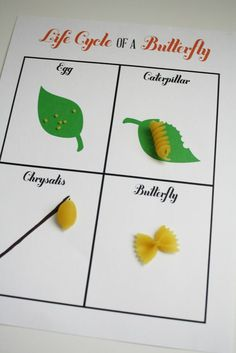 printable 'life cycle of a butterfly' activity. glue different kinds of pasta for each cycle.