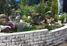Water gardening, water features, plants, Mid Ulster Garden Centre
