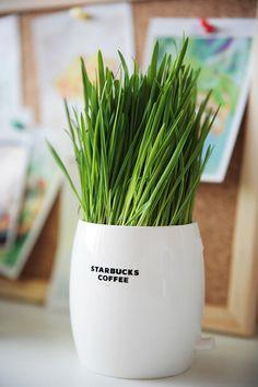Go green #starbucks