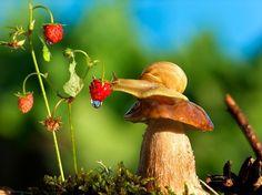 macro_photography_by_vyacheslav_mishchenko_12.jpg (721×540)