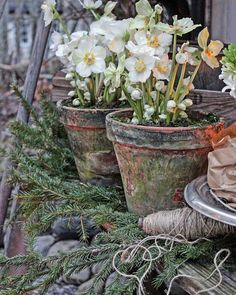 Pin Away Wednesdays: Winter Garden Inspiration - Vibeke Design, Pot Jardin, Deco Floral, Garden Structures, Winter Garden, Garden Pots, Garden Inspiration, Garden Landscaping, Outdoor Gardens