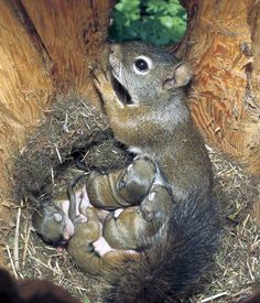 Mother squirrel and her beautiful babies