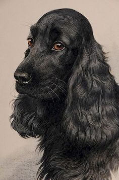 (French/Russian, Two Bird Dog portraits: A Springer Spaniel, Black Field Spaniel, both signed lower right Black Cocker Spaniel, Cocker Spaniel Puppies, English Cocker Spaniel, Pet Dogs, Dogs And Puppies, Doggies, Animals And Pets, Cute Animals, Cockerspaniel