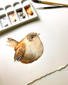 I've been editing videos all day but I was in need of a painting fix so I'm having a break while I paint this little fat Wren on an off cut piece of watercolour paper I have .
