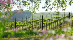 Napa Valley & Sonoma Road Trip: Wine country #TCSpringFling