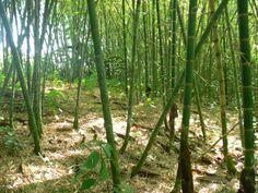 Senderos ecológicos | BambuTurismo