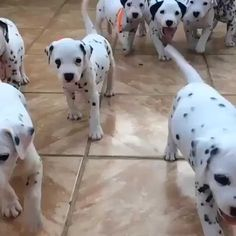 So many wagging puppy tails