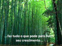 história do bambu chinês, como este incrível arbusto nos passa uma lição de vida