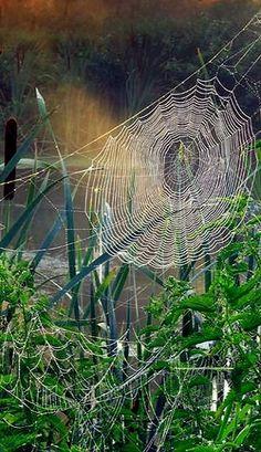 web spider..