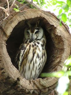 "* * OWL WISDOM: "" History teaches us dat nations only behaves wisely whenz dey haz exhausted every other alternative."""