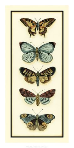 Butterfly collector vi giclee print by chariklia zarris Butterfly Illustration, Butterfly Drawing, Botanical Illustration, Illustration Cat, Origami Butterfly, Butterfly Template, Vintage Prints, Vintage Art, Vintage Butterfly