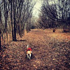 Adventures at Cedarvale Ravine - Toronto, ON - Angus Off-Leash #dogs #puppies #cutedogs #toronto #ontario #dogparks #angusoffleash