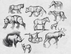 simple animal anatomy 2